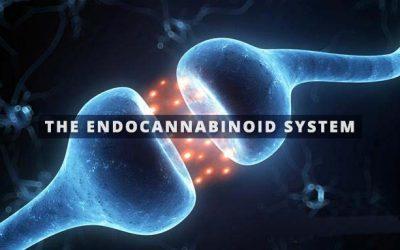 Basics of the Endocannabinoid System
