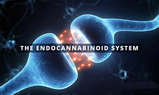 Basics of the Endocannabinoid System